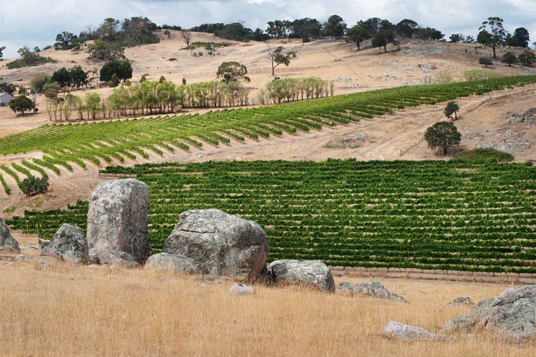 Granite Hills Baynton vineyard