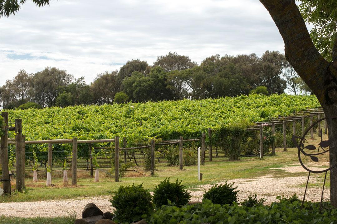 Hesket Estate vineyard in Macedon Ranges
