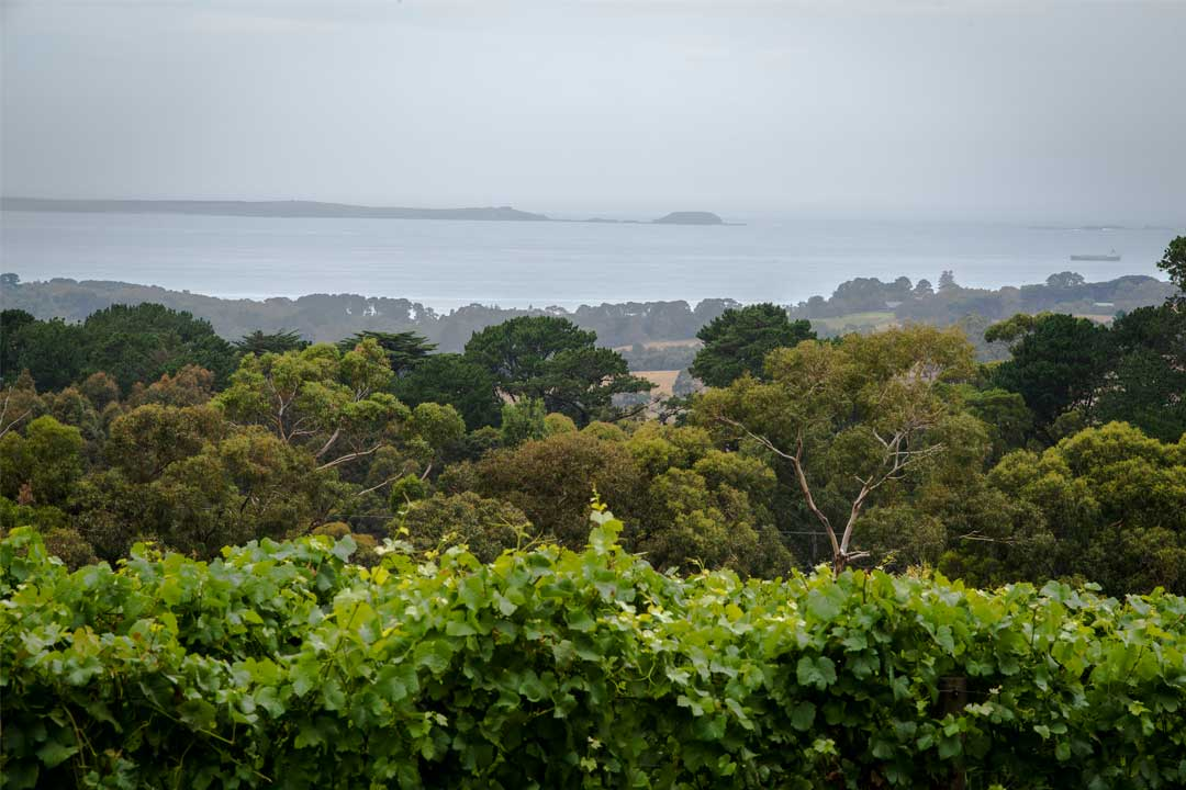 View from Red Hill Estate winery