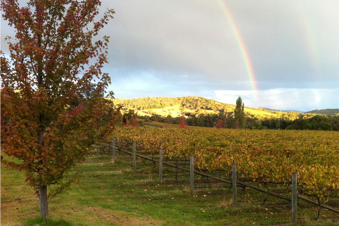 Sutherland Estate vineyard in Autumn