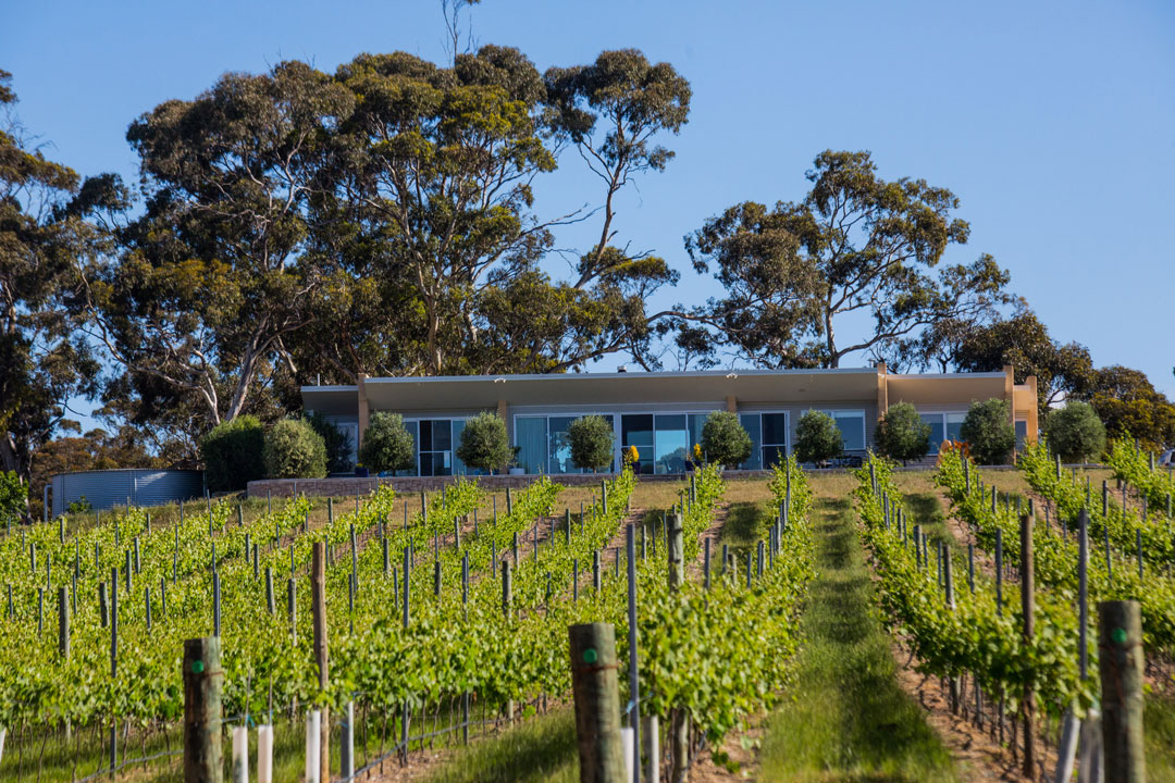 A.T. Richardson Winery vines and cellar door