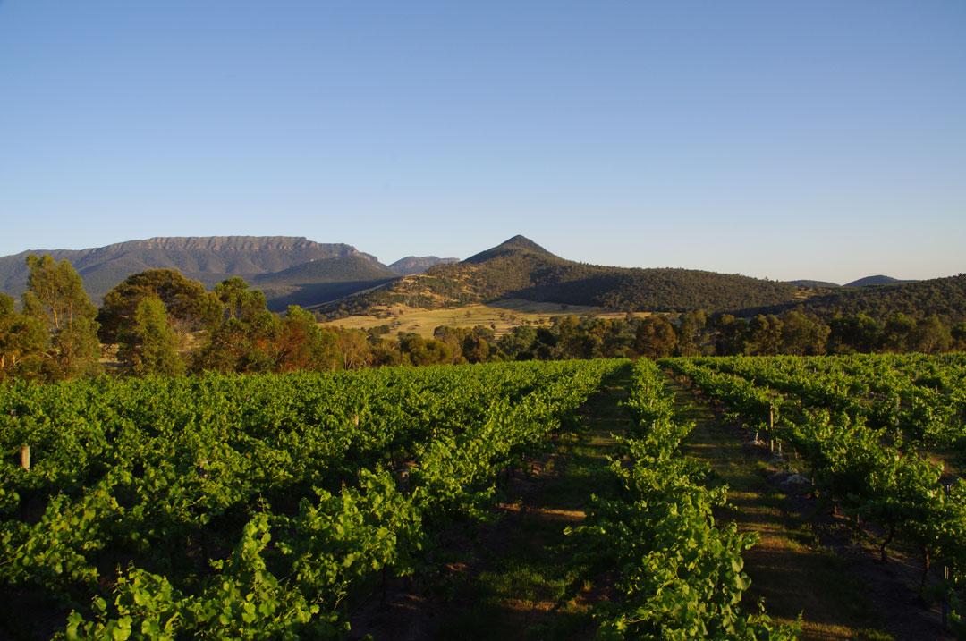Grampians Estate vineyard and grampians range