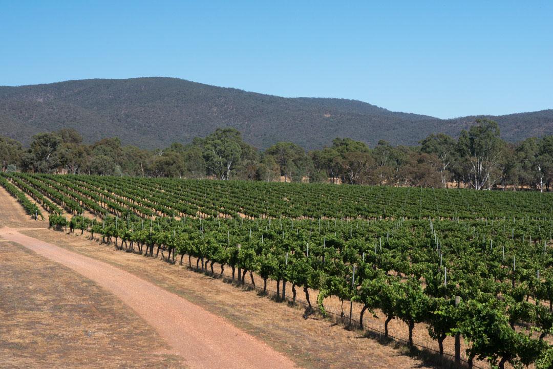 Mount Avoca vineyard and hills