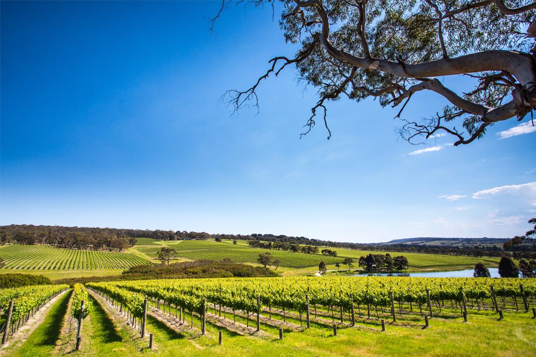 Outer Melbourne wineries wine geelong macedon ranges sunbury winery cellar door