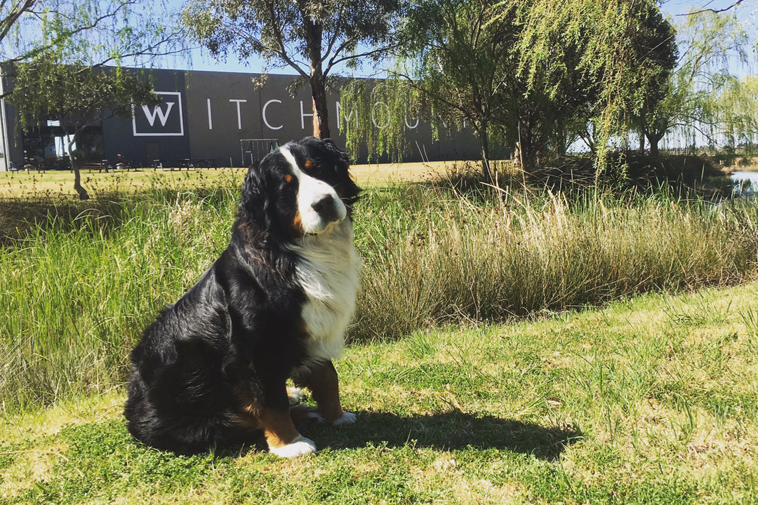 Witchmount Estate winery cellar door in Sunbury with family dog
