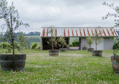 Wynnton Ridge Vineyard