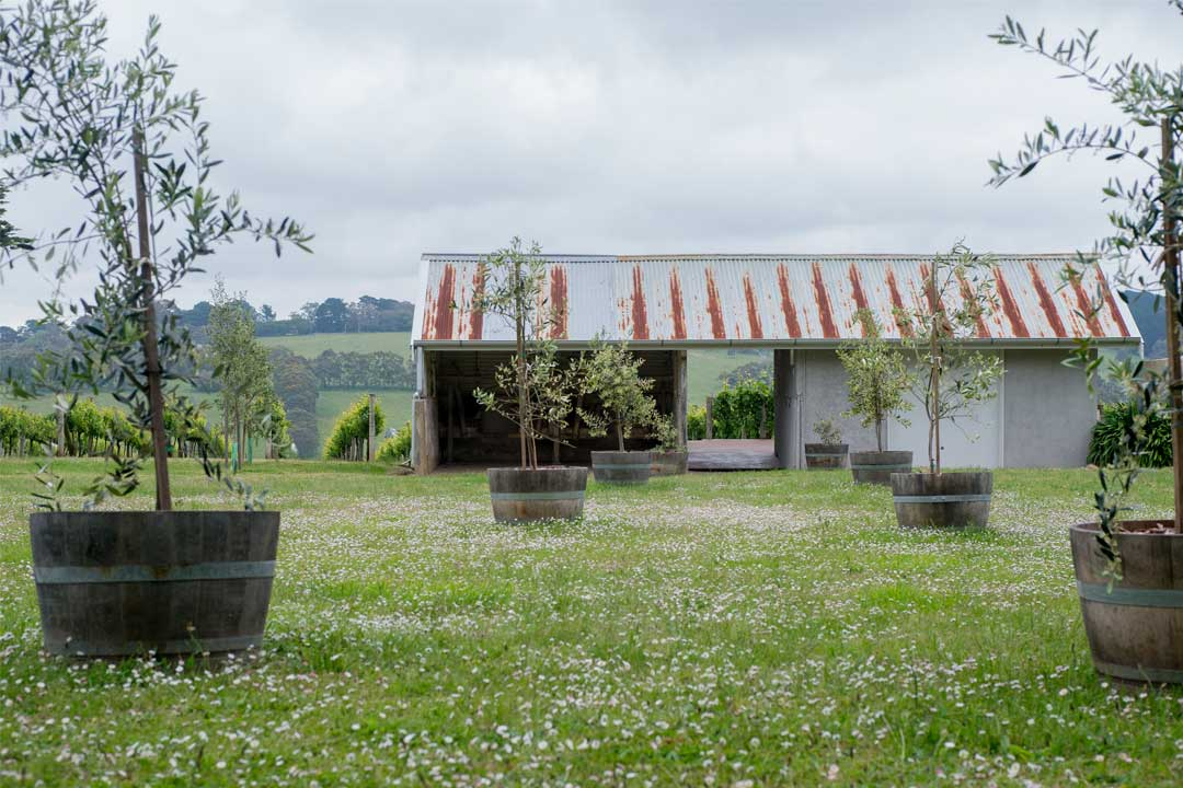 Wynnton Ridge Vineyard rustic shearing shed tasting room
